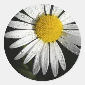 Simple Daisy Sticker