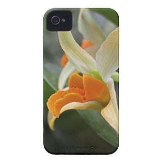 Simple Grace iPhone 4 Cover