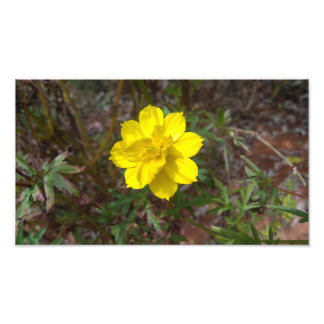 Simple yellow flower photo print