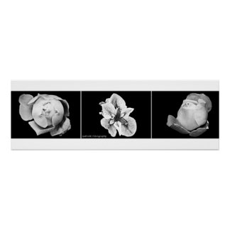 Simplicity Flowers Triptych Poster