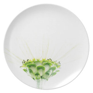 Simplistic White Zinnia Plates