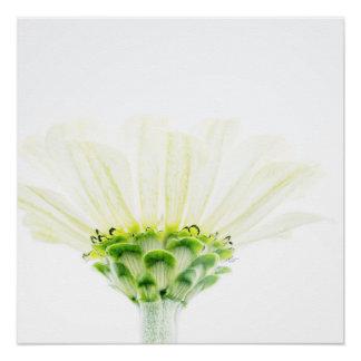 Simplistic Zinnia Flower Poster