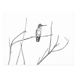 Simply a Hummingbird on a stick Postcard