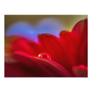 Simply Put a macro pic water droplet on daisy Photo Print