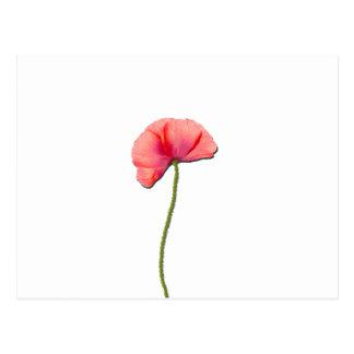 Sing red poppy flower minimalist simplicity post cards