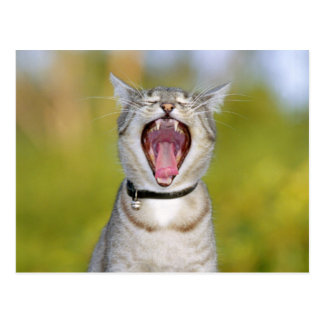Singing Cat Post Card