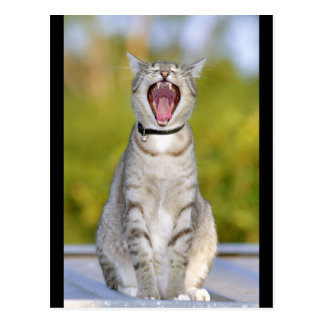 Singing Cat Postcard