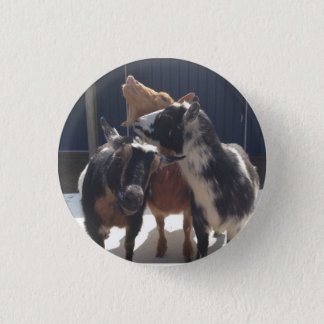 Singing Goats 1 Inch Round Button