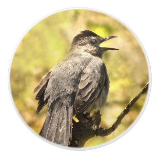Singing Gray Catbird Ceramic Knob