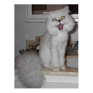 Singing Kitten Postcard