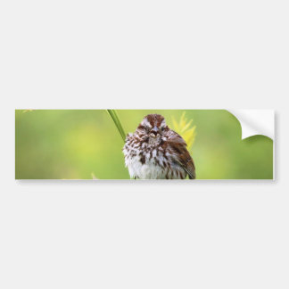 Singing Sparrow Bumper Sticker