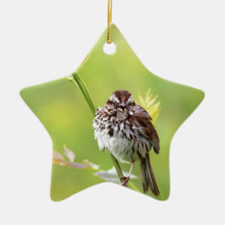 Singing Sparrow Ceramic Star Ornament