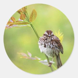 Singing Sparrow Classic Round Sticker