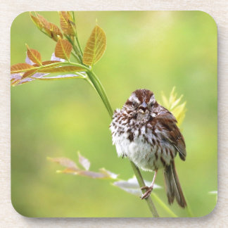 Singing Sparrow Drink Coasters