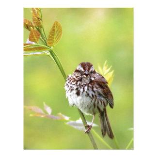 Singing Sparrow Letterhead