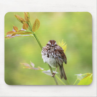Singing Sparrow Mouse Pad