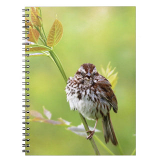 Singing Sparrow Notebook