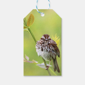 Singing Sparrow Pack Of Gift Tags