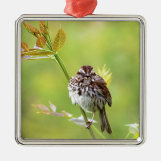 Singing Sparrow Silver-Colored Square Ornament