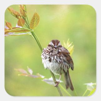 Singing Sparrow Square Sticker