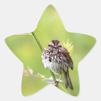 Singing Sparrow Star Sticker