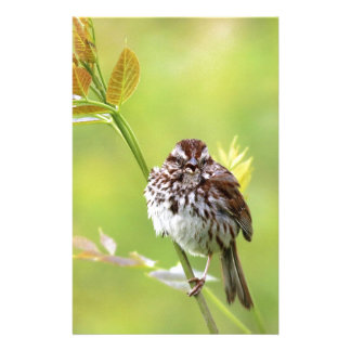 Singing Sparrow Stationery