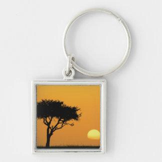 Single Acacia tree silhouetted at sunrise, Masai Silver-Colored Square Keychain