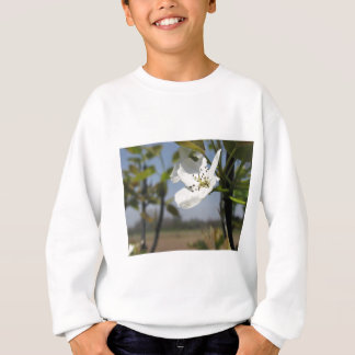 Single blossom of a pear tree in spring sweatshirt