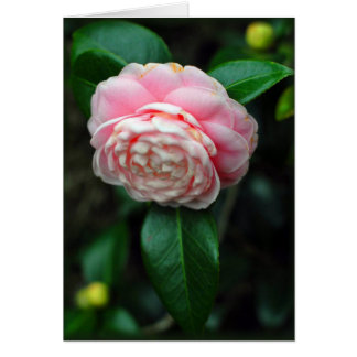 Single camellia bloom card