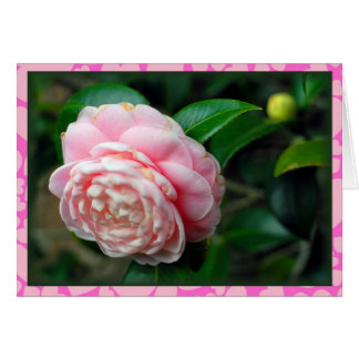 Single camellia with heart border Valentine's Day Card