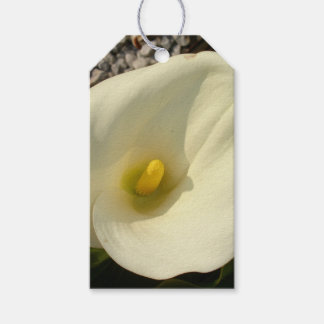 Single Cream White Calla Lily With Garden Backgrou Pack Of Gift Tags