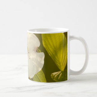 Single Dogwood Blossom Photograph Coffee Mug
