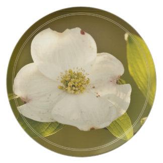 Single Dogwood Blossom Photograph Party Plates