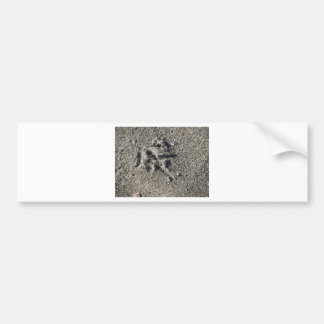 Single footprint of seagull bird on beach sand bumper sticker