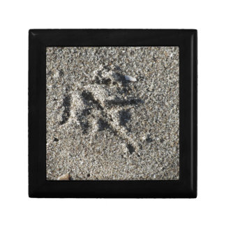 Single footprint of seagull bird on beach sand gift box