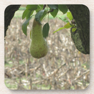 Single green pear hanging on the tree beverage coasters