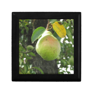 Single green pear hanging on the tree gift boxes