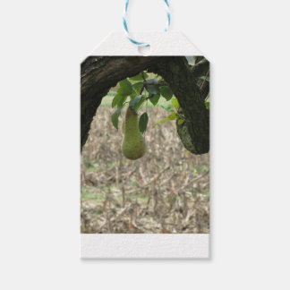 Single green pear hanging on the tree gift tags