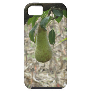 Single green pear hanging on the tree iPhone 5 case