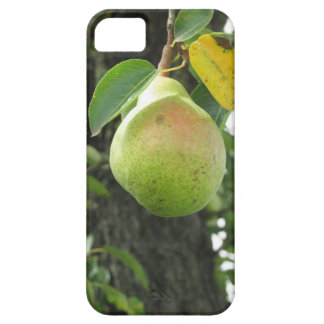 Single green pear hanging on the tree iPhone 5 cases