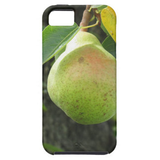 Single green pear hanging on the tree iPhone 5 cover