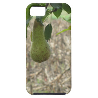 Single green pear hanging on the tree iPhone 5 covers