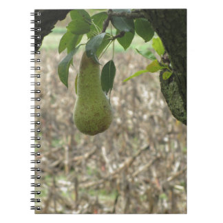 Single green pear hanging on the tree notebooks