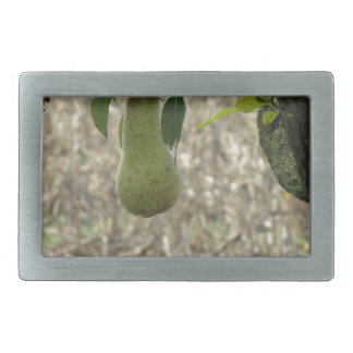 Single green pear hanging on the tree rectangular belt buckles