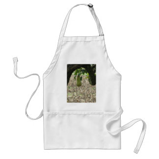 Single green pear hanging on the tree standard apron