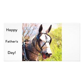 Single grey mule photo cards