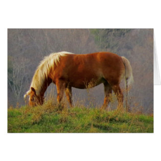 Single Horse Grazing Card