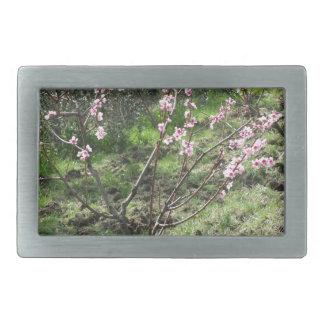 Single peach tree in blossom. Tuscany, Italy Belt Buckles