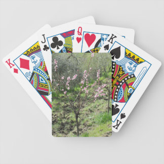 Single peach tree in blossom. Tuscany, Italy Bicycle Playing Cards