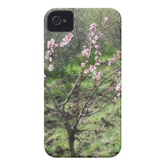 Single peach tree in blossom. Tuscany, Italy iPhone 4 Case-Mate Case
